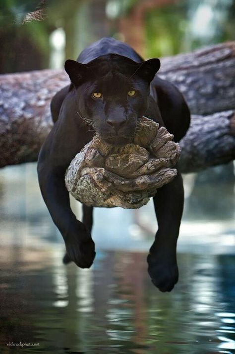 The Panther - Instagram